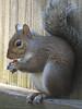 12 12 25 Birds Backyard squirrel 01