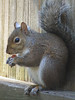 12 12 25 Birds Backyard squirrel 01