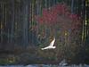 2012 12 17 Places North Shore bird in flight