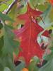 2013 12 TW Autumn tangle