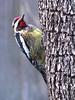 12 12 25 Birds Backyard woodpecker 01