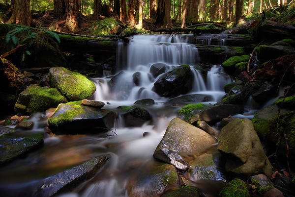 Cascade in the Sol Duc Rain Forest.  Olympic National Park, Washington.