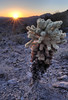 Sunrise and Cactus<br /> The Needles, Arizona.<br /> <br /> Copyright © 2012<br /> All rights reserved.
