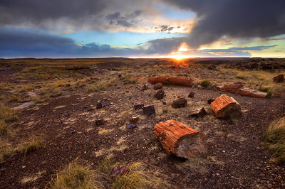 Petrified Forest National Park, Arizona.  Copyright © 2011 All rights reserved.