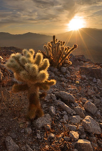 Sunset over Cactus Anza-Borrego State Park, California.  Copyright © 2011 All rights reserved.