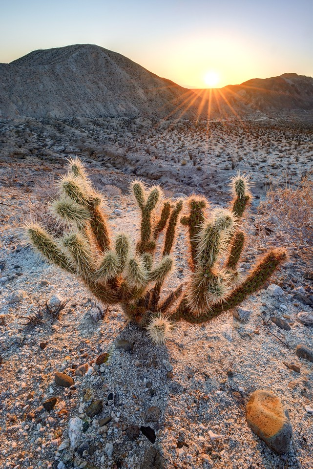 Anza-Borrego State Park, California.<br /> Copyright © 2016<br /> All rights reserved.