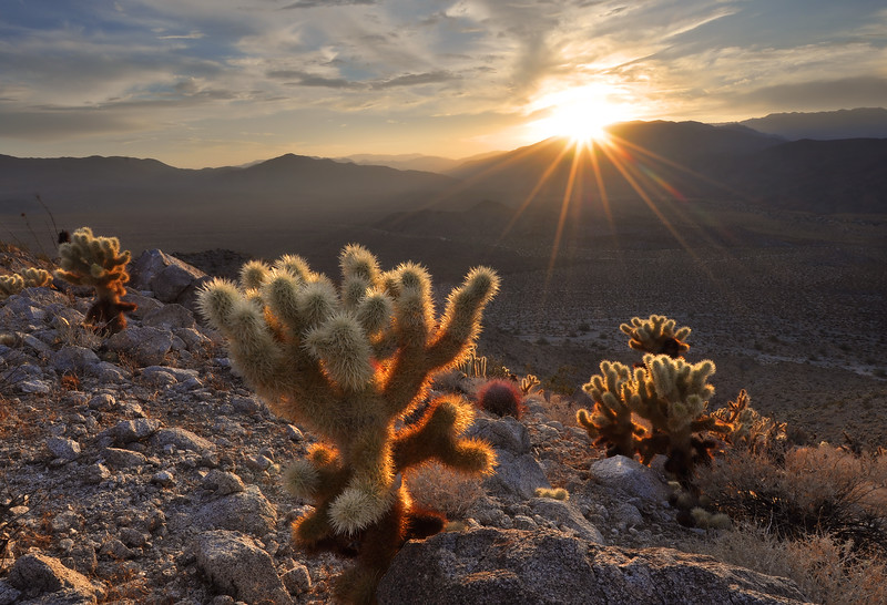 Sunset over Cactus<br /> Anza-Borrego State Park, California.<br /> <br /> Copyright © 2011<br /> All rights reserved.