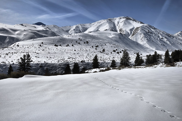 Footprints to Mount Alice.  Sierra Nevada Range, California.  Copyright © 2010 All rights reserved.