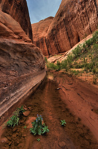 Davis Gulch.   Glen Canyon, Utah. Copyright © 2011 All rights reserved.