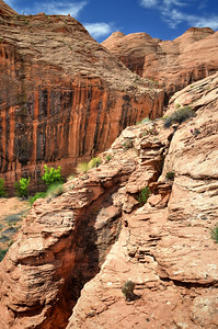 Davis Gulch Glen Canyon, Utah. Copyright © 2010 All rights reserved.