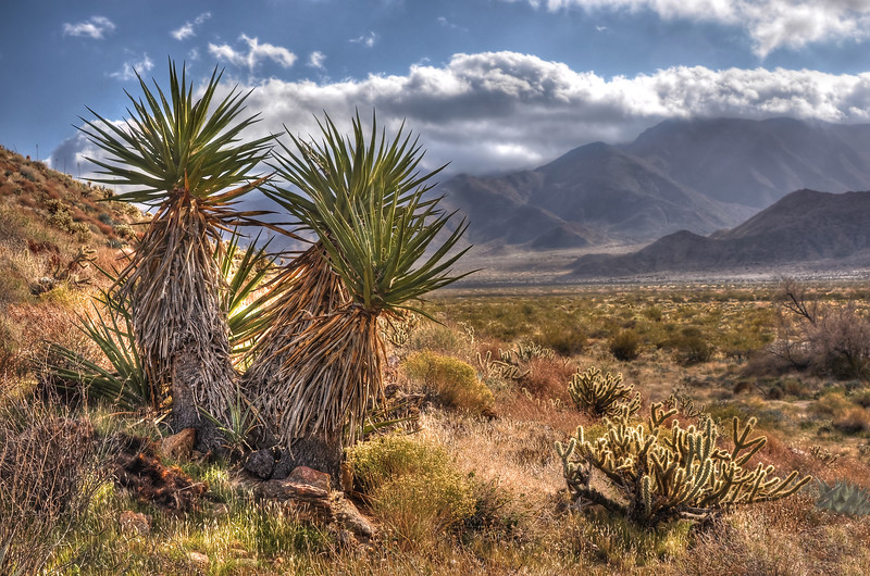 "-PHOTOGRAPH OF THE MONTH (January 2012)<br /> Category ""Plant Life""<br /> MyParkPhotos.com<br /> <br /> Yucca and Clouds<br /> Anza-Borrego State Park, California.<br /> Copyright © 2011<br /> All rights reserved."