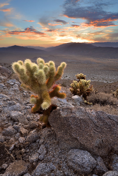 "-2ND PLACE WINNER<br /> August 15-21, 2011 ""Photograph of the Week"" @ Fotki.com<br /> <br /> Sunset over Cactus<br /> Anza-Borrego State Park, California.<br /> Copyright © 2011<br /> All rights reserved."