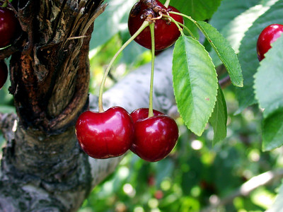 """Cherry Kiss""..by Cassis"