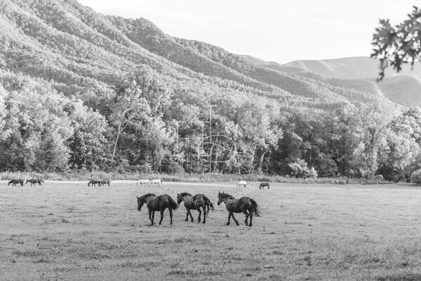 Great Smoky Mountain National Park - Cades Cove