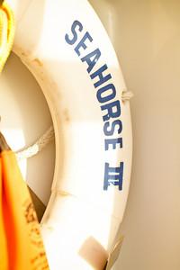 Seahorse_Fall 2010_Bahamas