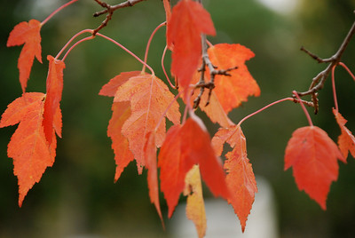 Falling Leaves | Fall 2008 | Location Unknown