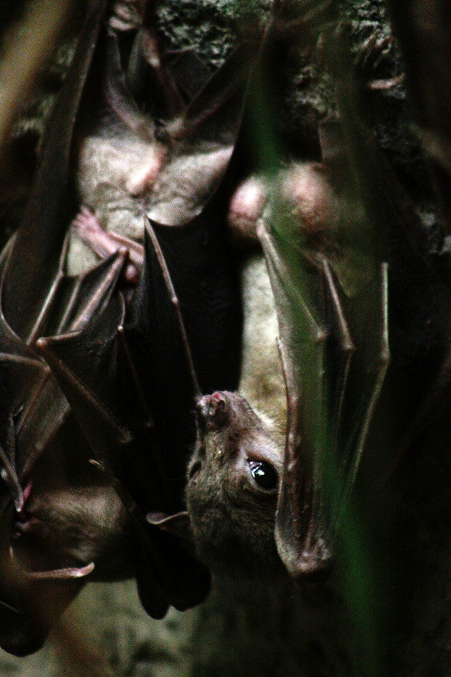 These two little bats were hiding near one of the bridges.