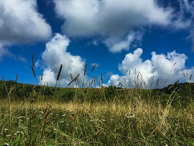 grasses on the bald