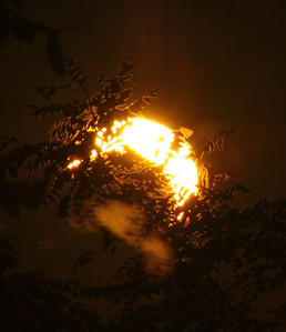 The partial eclipse through some trees.