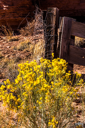 fence post florals