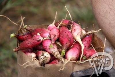 7 . 27 - 2013 • FARMERS' MARKET — orleans, ma