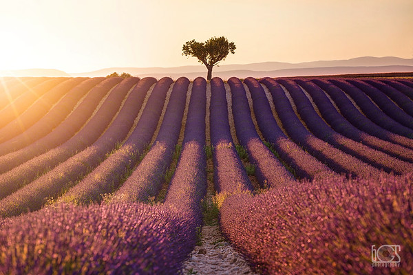 A sunset in Valensole
