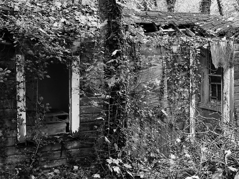 Overgrown  Memories #1