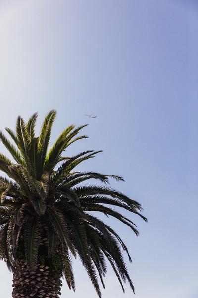 Fine art photography prints of Newport Beach, CA palm tree