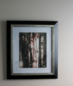 Peeling bark. Birch tree in Yukon Territory.Framed. Print size; 30 x 35MM Available in your choice of size and material. Original image at; http://smu.gs/1gPxFVZ
