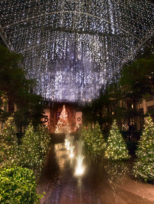 《長木公園聖誕夜景》(Longwood Garden)