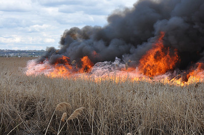 04.11.12 - Multiple Alarm Brushfire - Carlstadt, NJ.