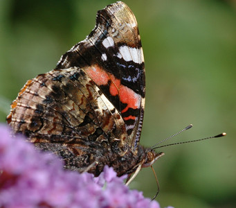 07/07 - New Forest - Macro