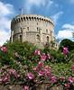 00afavorite windsor castle turret and flowers
