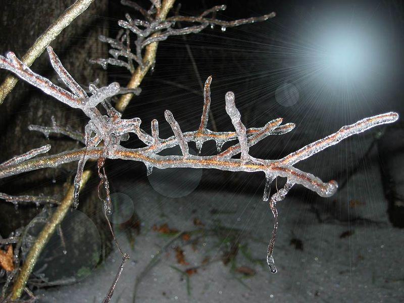 00aFavorite 20021204 Ice storm frozen branch cl [special moon effect]