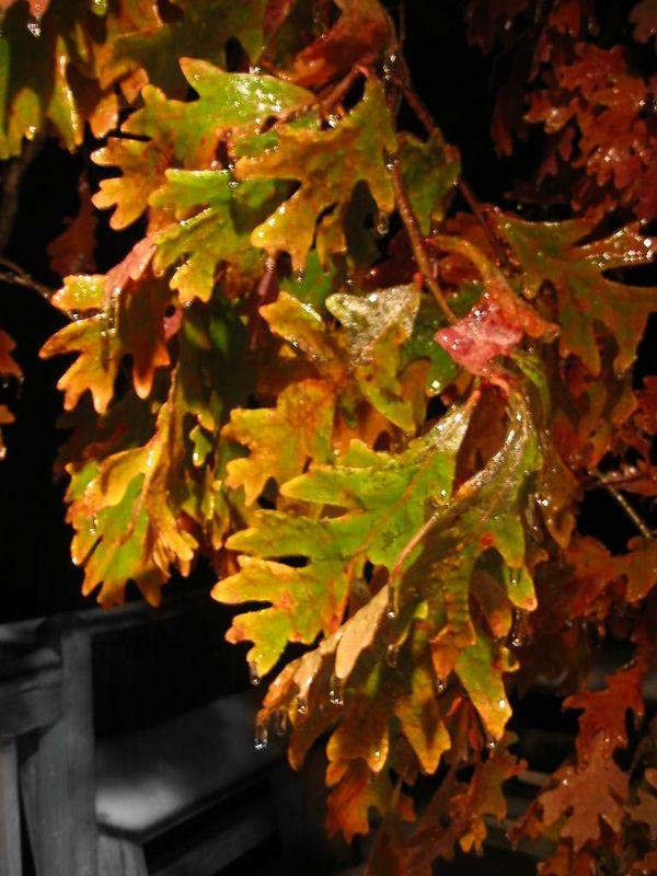 Hanging thawing leaves