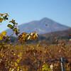 Tecate Peak
