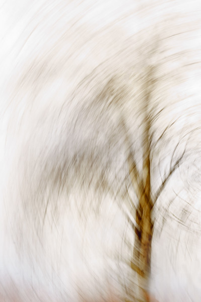 12/12 PROJECT:   MONTH 7, THEME INTENTIONAL CAMERA MOVEMENT