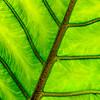 TOPIC:  Month 9 Botanicals