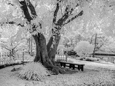 MONTH 2:  Week 2 Regarding Trees:  By the Light of Infrared