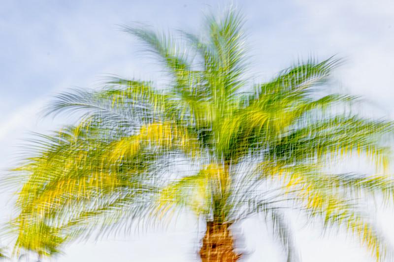 MONTH 2:  Week 4:  Regarding Trees:  Blowing:  in the Wind