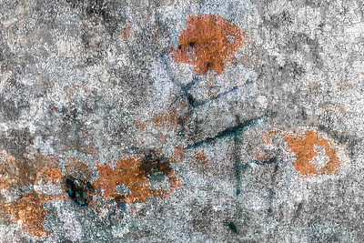 MONTH 2: Week 1 Regarding Trees:  Lichen Abstract