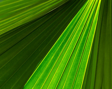 MONTH 2 :  Week 3  Regarding Trees: Abstraction of Palmetto Tree Leaf