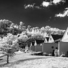 """MONTH 10:  Infrared with A6000, Week 1,"""" Neighborhood."""""""