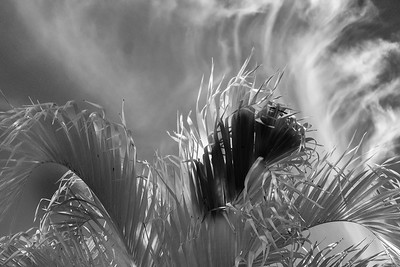 """MONTH 3:  WEEK  2: Topic: Cloud and Palms Connections:  """"Into the Flow"""""""