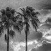 """MONTH 3:  WEEK  4: :  Topic: Cloud and Palm Connections:  """"Palm Trees with the Sky"""""""""""