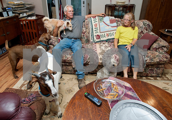 Donald and Kristen Tjernlund relax in their living room with three of their dogs and a goat named Zoe at the end of the day June 25, 2015. The Tjernlunds operate Tjernlund Goat Farm at their home in Grand Saline. Kristen Tjernlund uses  their goat milk to make bath and body products which she sells online and at local farmer's markets and craft fairs. Zoe the goat has the privilege of spending her nights inside the Tjernlund's home because as a baby she was rejected by her mother and now feels more comfortable living as a pet than a farm animal.  (photo by Sarah A. Miller/Tyler Morning Telegraph)