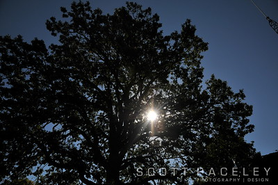 14.003 UrbanaLegacyTree Burr Oak