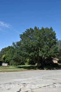 15.019b UrbanaTree 2316 S. Cottage Grove