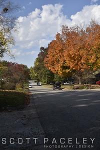 15.019d Urbana Tree Montclair