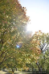 15.019d Urbana Tree Crystal Lake Park